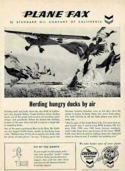 Taylorcraft Herding Hungry Ducks By Air Chevron (1957)