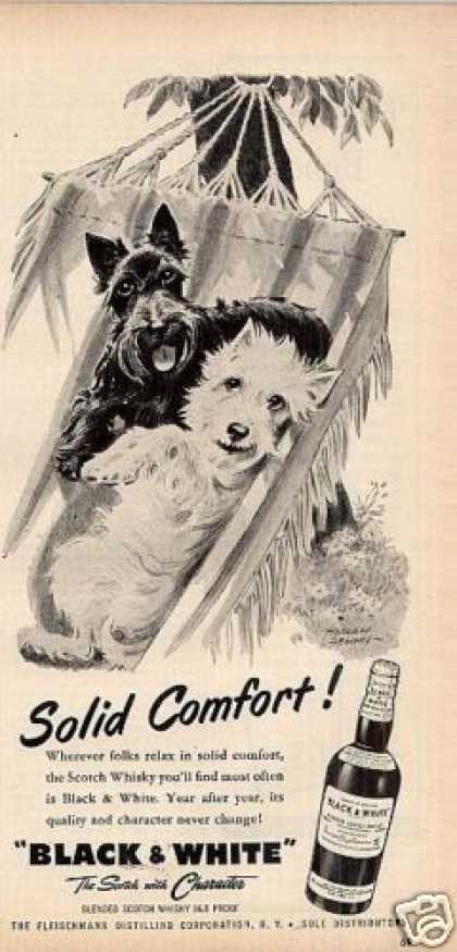 B&amp;w Ad &quot;Solid Comfort&quot; Westie/scottie (1956)