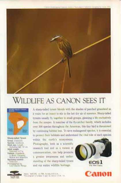 Canon EOS1 Camera Lens – Sharp-tailed Tyrant Bird (1993)