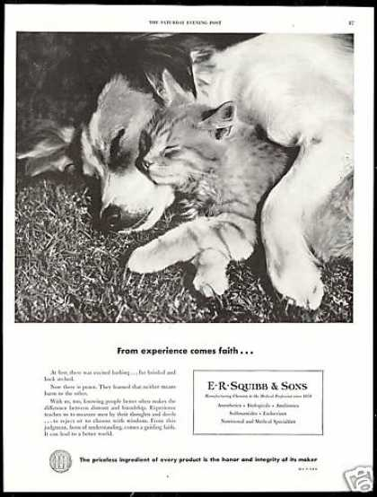 Cute Dog Cat Photo E R Squibb & Sons Vintage (1950)