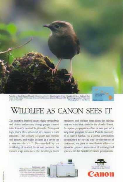 Canon Color Laser Copier – Puaiohi Small Kauai Thrush Bird (1999)