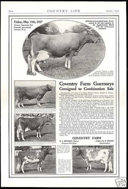 Coventry Farm Guernsey Cow Sale Vintage (1927)
