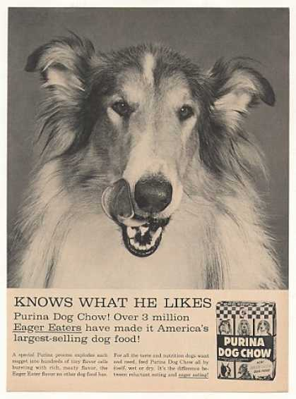 Collie Purina Dog Chow Photo (1960)