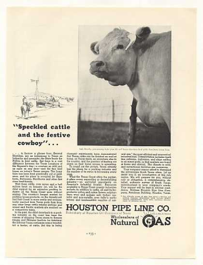 Lady Dorothy Shorthorn Heifer Houston Pipe Line (1937)