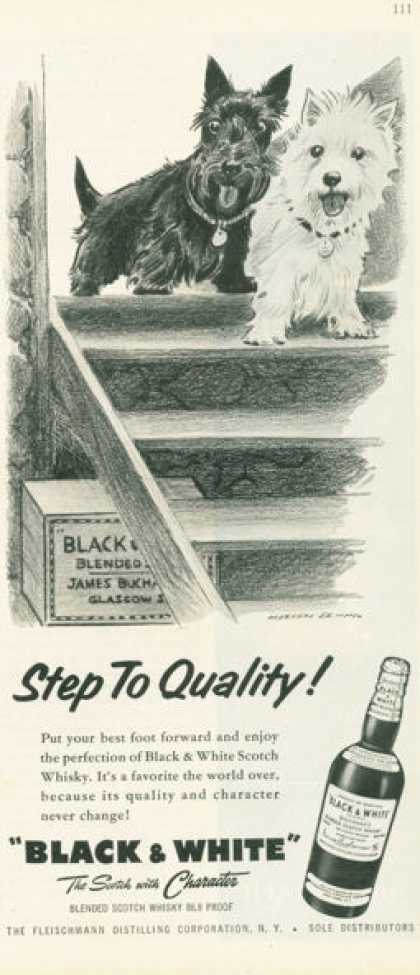 Black & White Scotch Step To Quality (1958)