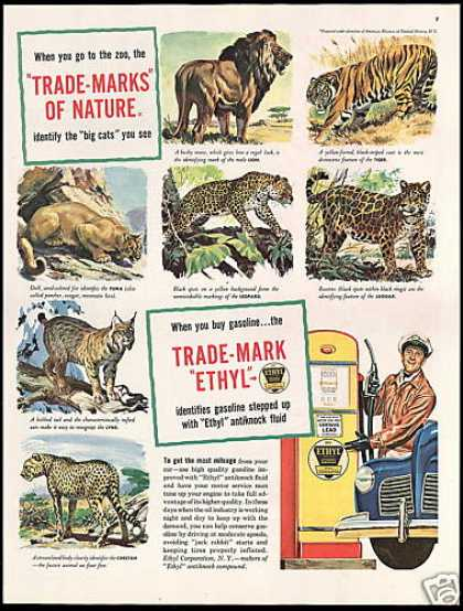 Ethyl Gasoline Cats Lion Tiger Puma (1948)