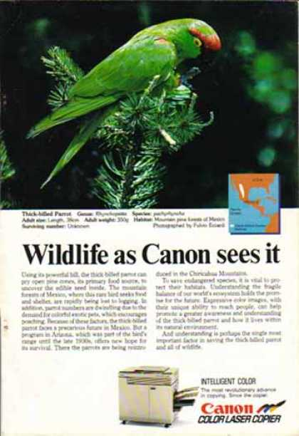 Canon Color Laser Copier – Thick Billed Parrot (1988)