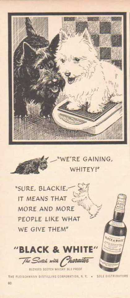 Black & White Scotch Whiskey Scottish Terriers – Were Gaining… (1949)
