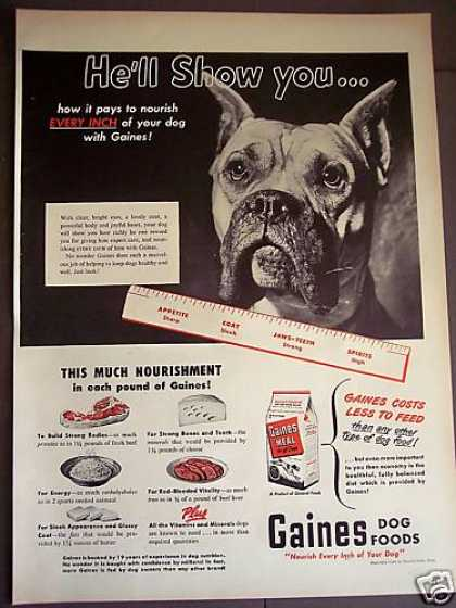 Boxer Photo Gaines Meal Dog Food (1949)