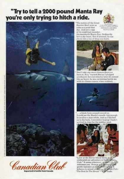 Canadian Club Ad 2000 Pound Manta Ray Photos (1972)