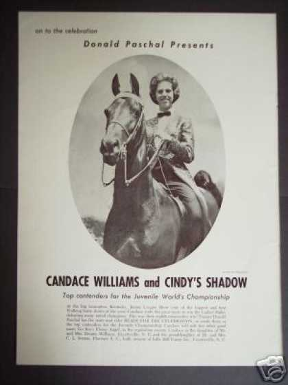 Tennessee Show Horse Cindy's Shadow Photo (1965)