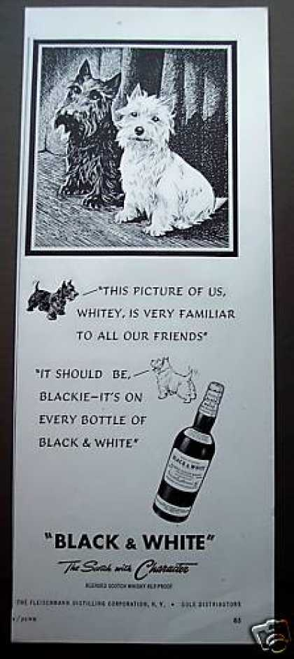 Black & White Scottish Terriers Art Scotch (1949)