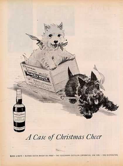 "B&w Ad ""A Case of Christmas.."" Westie/scottie (1956)"