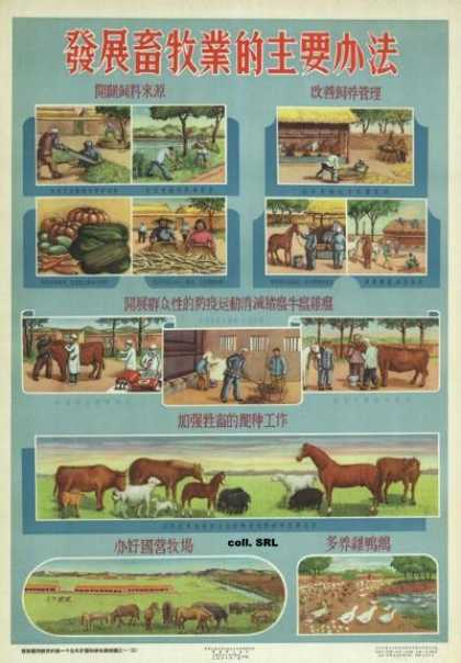 Important methods to develop animal husbandry (1956)