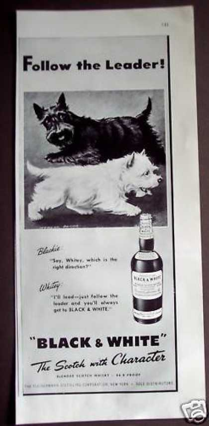 Scottish Terrior Dogs Black &amp; White Whisky (1948)