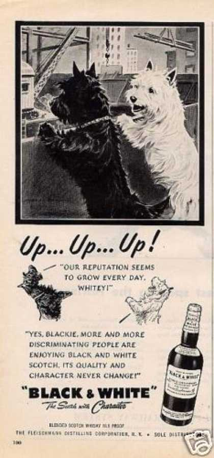"B&w Ad ""Up...up...up"" Westie/scottie (1951)"