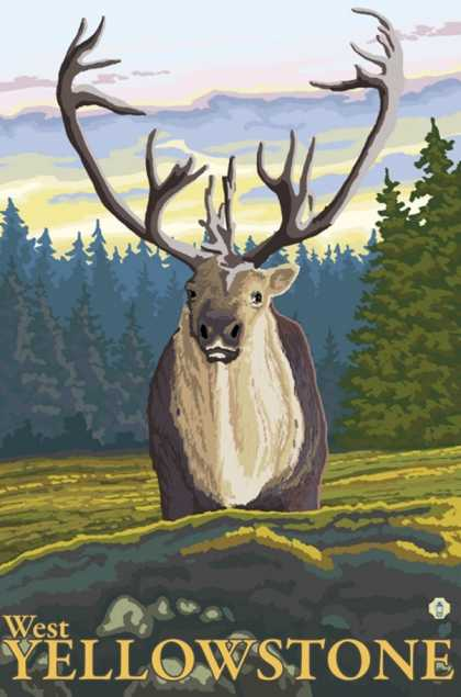 Caribou in the Wild, West Yellowstone, Montana