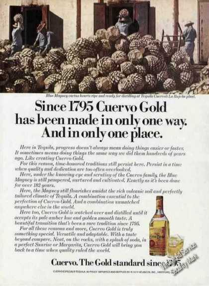 Since 1795 Cuervo Gold Blue Maguey Cactus Heart (1977)