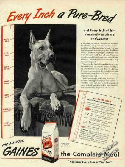 Fawn Great Dane Photo Collectible Gaines Meal (1944)