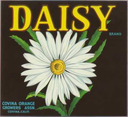 Daisy Brand Citrus Crate Label &#8211; Covina, CA