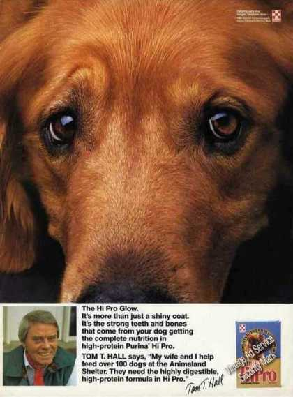 Irish Setter Closup Face Photo Tom Hall Purina (1990)