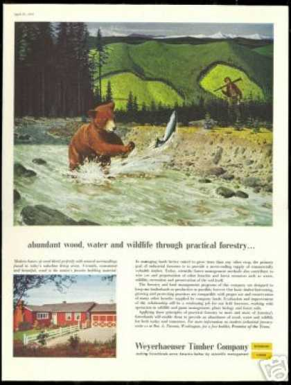 Bear Stream Fish Art Weyerhaeuser Co (1957)