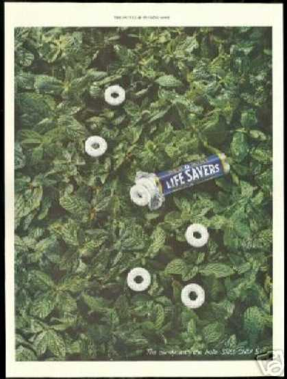 Peppermint Life Savers Candy Mint Plant Photo (1949)