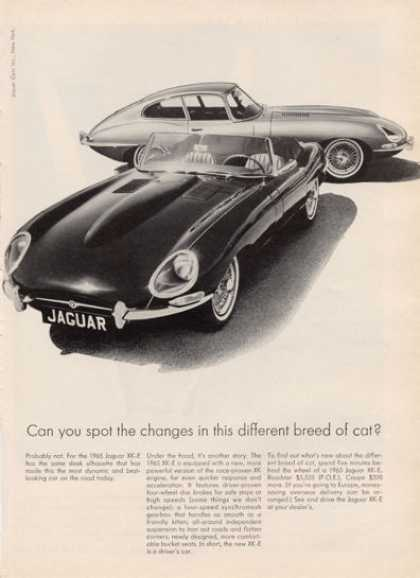 Jaguar Xk-e Coupe and Convertible (1964)