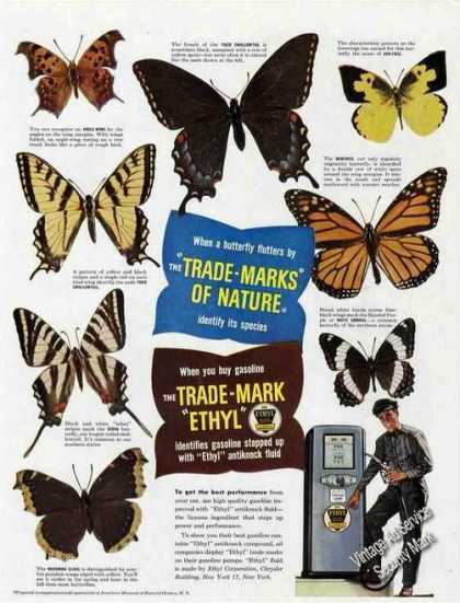 Beautiful Butterfly Photos Ethyl (1948)