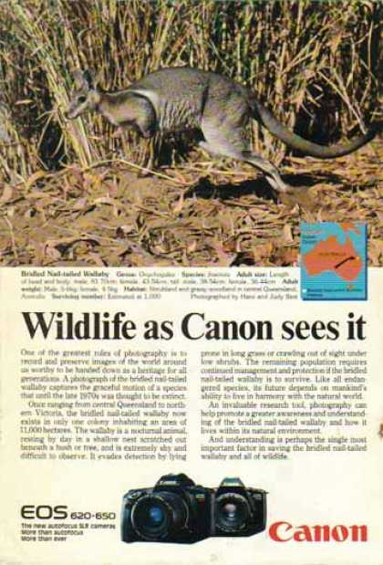 Canon EOS 620 650 SLR Cameras – Bridled Nail Tailed Wallaby (1988)