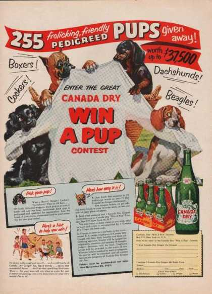 Pedigreed Pups Give Away Canada Dry Soda A (1951)