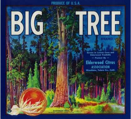 Big Tree Orange Label – Woodlake, CA