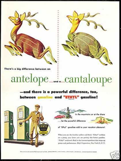 Antelope Cantaloupe Ward Art Ethyl Gas (1951)