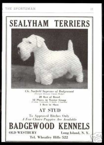 Sealyham Terrier Photo Print Badgewood Kennel (1938)