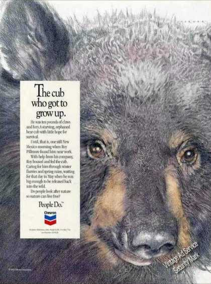 """The Bear Cub Who Got To Grow Up"" Rare Chevron (1992)"