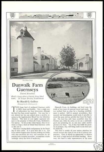 Dunwalk Farm Bedminster New Jersey Guernsey Cow (1926)