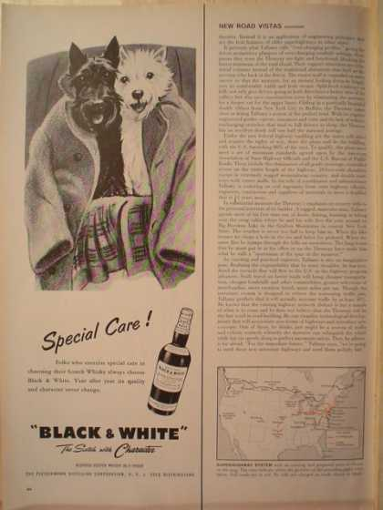 Black and White Scotch Terriers Special Care (1956)