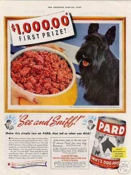 Pard Dog Food Ad Scottish Terrier (1941)