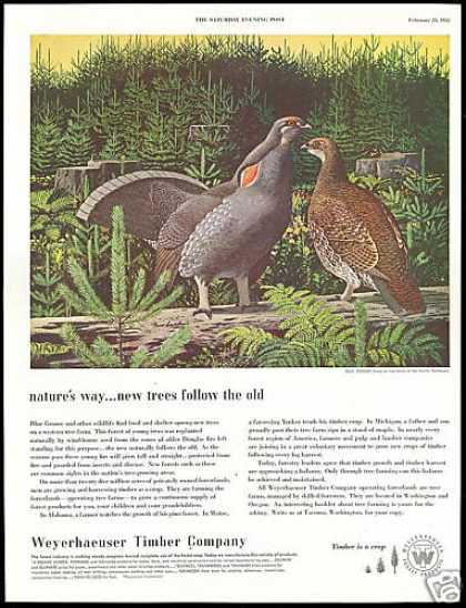 Blue Grouse Bird Art Weyerhaeuser Timber Co (1952)