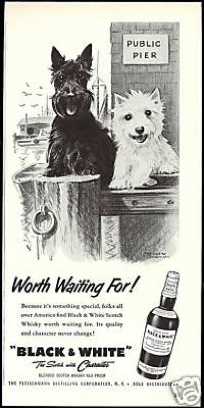 Scottish Terrier Westie Pier B&W Scotch (1957)