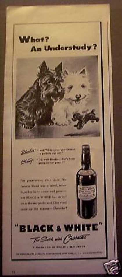 Black & White Whisky Scottish Terrior Dogs (1945)