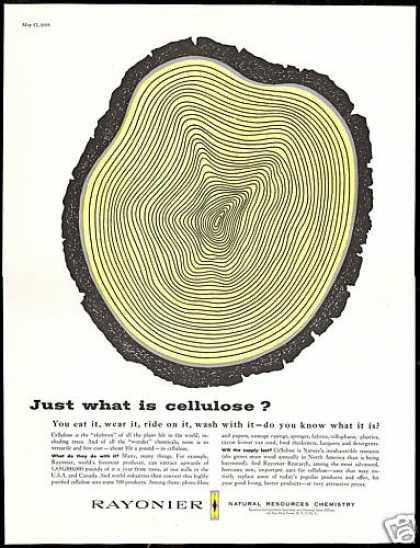 Tree Cellulose Skeleton Rayonier Research (1958)