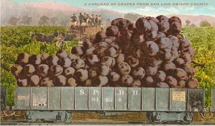Carload of Grapes from San Luis Obispo County