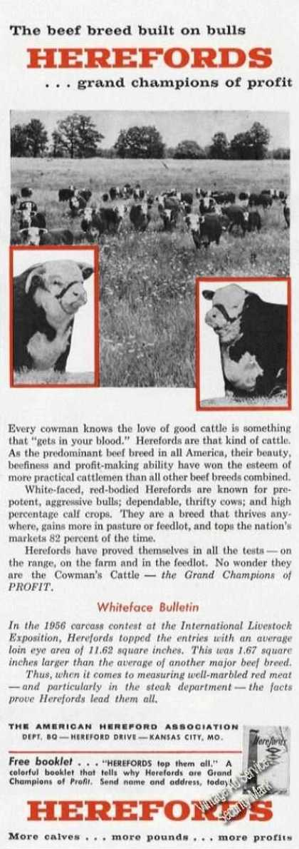 Herefords Grand Champions of Profit Farm (1958)