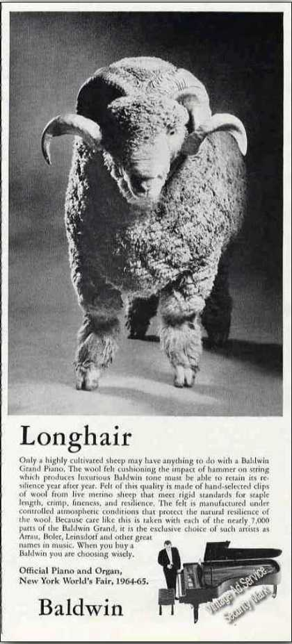 "Baldwin Grand Piano ""Longhair"" Sheep Photo (1964)"