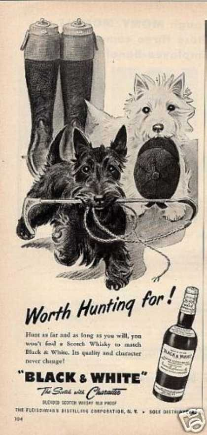 B&amp;w Ad &quot;Worth Hunting For!&quot; Westie/scottie (1955)