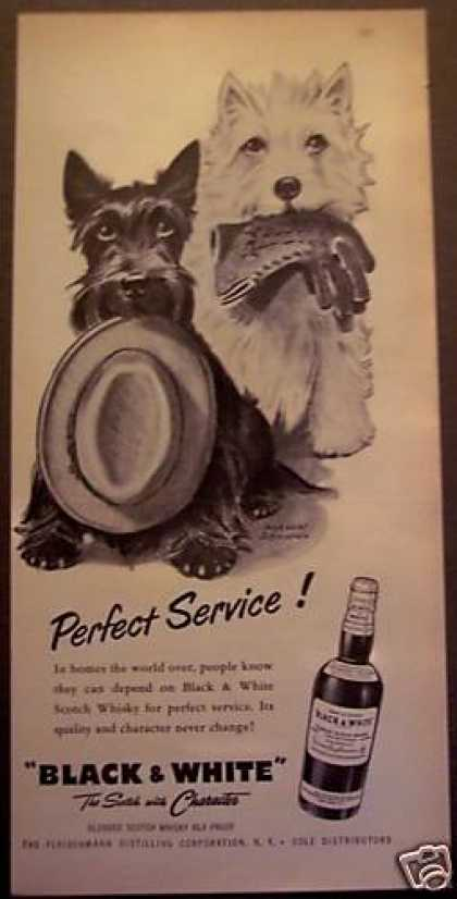 Scottish Terrior Dogs Black & White Whisky (1956)