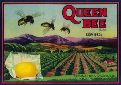 Queen Bee Lemon Label – Corona, CA