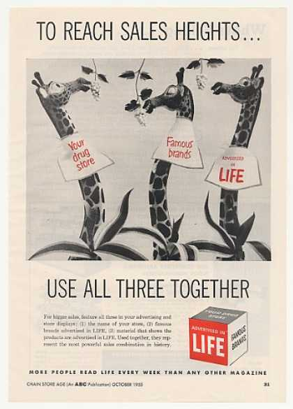Three Giraffe art Life Magazine (1955)
