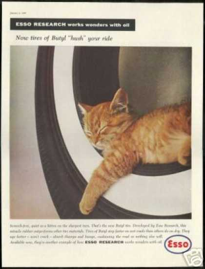 Orange Tabby Kitten Cat Photo Esso Vintage (1960)